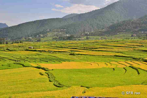 Landschaft in Bhutan